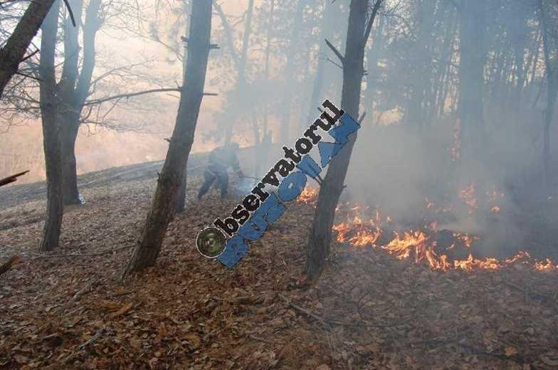 incendiu-padure1